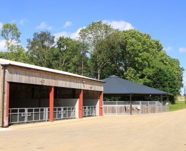 horse-walker-view